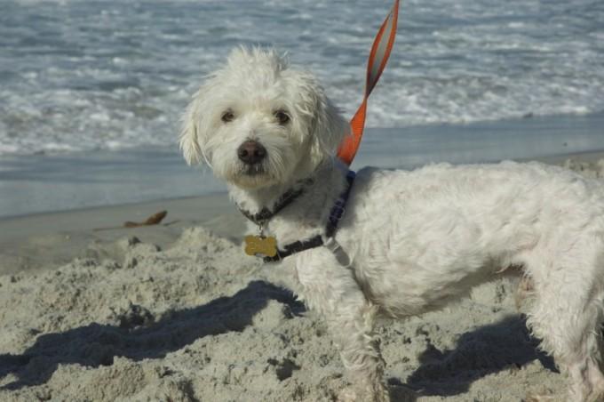 The Santa Cruz Dog LeashDebate