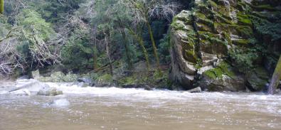 San Lorenzo River in the winter.